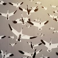 sparrow-165